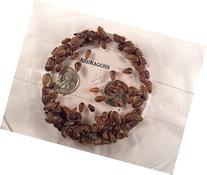 Dubia Roaches 200 Small