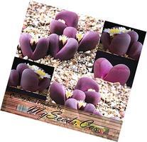 50+ LITHOPS OPTICA Species Mix Seeds - Cactus Mix - House