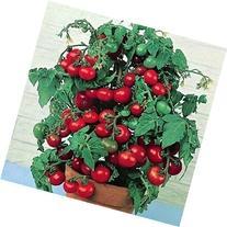 "50+ Heirloom Vegetable Seeds - Tomato - ""Tiny Tim"" It Grows"