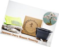 9GreenBox - Japanese Cherry Blossom Flowering Bonsai Seed