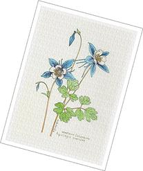 Botanical Illustration of Columbine from the Wildflowers