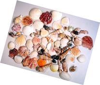 Creative Hobbies Sea Shells Mixed Beach Seashells - Various