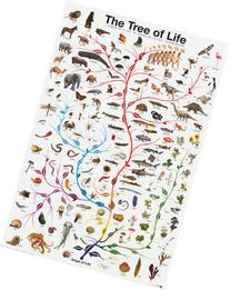 Evolution Tree of Life featuring Charles Darwin, 24x36