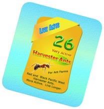 LIVE Harvester Ants --  for Ant Farms Plus Free Ant Chow