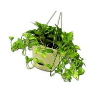 Misco HP254-072 Flare Hanging Planter, 12-Inch, Latte