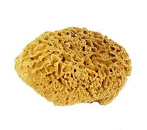 5-6 Inch Natural Sea Sponge For Bathing, Cleaning and Sponge