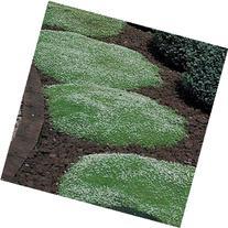 Outsidepride Irish Moss - 10000 Seeds