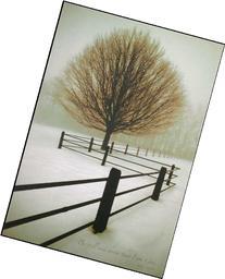 P. Graham Dunn BOA81 Solitude - 10.25 X 15
