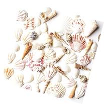 Sea Shells Mixed Beach Seashells - Various Sizes up to 2""