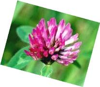 The Dirty Gardener Red Clover Seed, 1 Pound