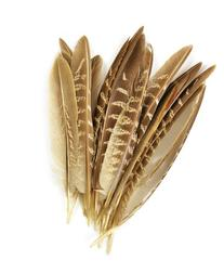 Touch of Nature 38192 Pheasant Wing Quill, 7-Inch