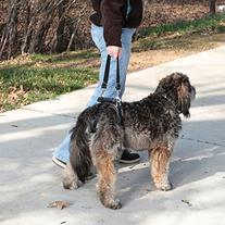 Solvit Care Lift Dog Mobility Lifting Aid