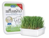 Cat-A'bout Multi-Cat CatGrass Plus Tub 150 grams by