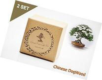 Set of 2 Chinese DogWood Bonsai Seed Kit- Gift - Complete