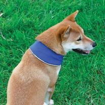 Cool-It Dog Puppy Cooling Bandana - Blue - Small Clothing