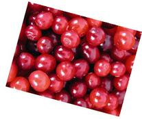 Cranberry Seed Oil 100% Pure Organic Cold Pressed 2 Oz