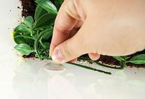Exo-Terra Plastic Plant Small Amapallo