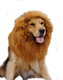 econoLED Large Pet Dog Cat Lion Wigs Mane Hair Festival