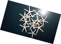 Finger Starfish, 3 to 4 Inch - 10 Pack
