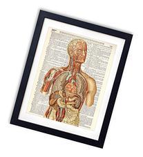 Human Anatomy Color Dictionary Art Print 8x10