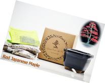 9GreenBox - Red Japanese Maple Bonsai Seed Kit- Gift -