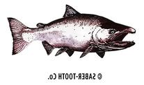 King/Chinook Salmon Decal/sticker Fresh Water Fish