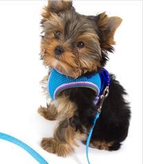 Lil Pals Mesh Comfort Mesh Adjustable Step-in Dog Harness