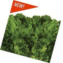 Mixed Kale Seed Pod Kit for Aerogarden