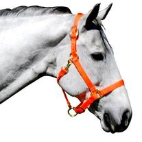 Intrepid International Nylon Halter, Neon Orange, Cob