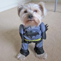 Alfie Pet by Petoga Couture - Superhero Costume Batman -