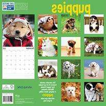 Avalon 12 x 12 Inches Puppies 2015 16-Month Wall Calendar