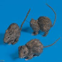 Realistic Hairy Rats for Halloween -3 Piece Set by Fun