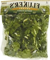 Fluker's Repta Vines-Pothos for Reptiles and Amphibians