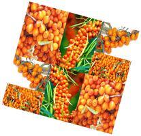 Sea Buckthorn or Seaberry  - 100 Medicinal Shrub Seeds
