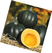 David's Garden Seeds Squash Winter Honey Bear D689A  50