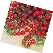 Sweet Million Cherry Tomato  Tomato 150 Seeds By Jays Seeds