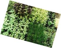 Ten Herb Plants- One each: , Chives, Parsley, Sage, Thyme,