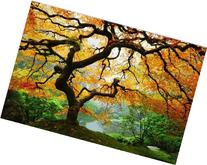 Startonight Wall Art Canvas Maple Tree, Nature USA Design
