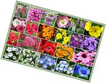 David's Garden Seeds Wildflower Partial Shade Seed Mix